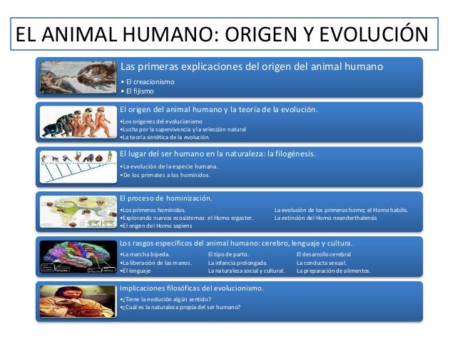 EL ANIMAL HUMANO: ORIGEN Y EVOLUCIÓN  Las primeras explicaciones del origen del animal humano  • El creacionismo  • El fij...