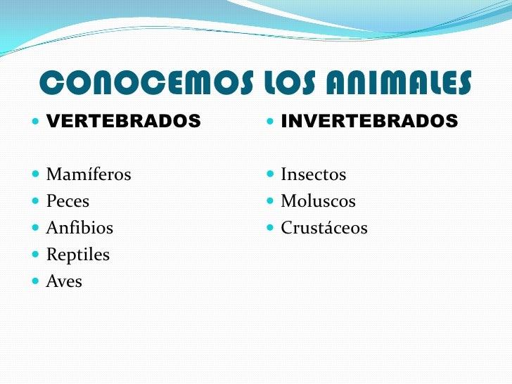 CONOCEMOS LOS ANIMALES VERTEBRADOS    INVERTEBRADOS Mamíferos      Insectos Peces          Moluscos Anfibios      ...