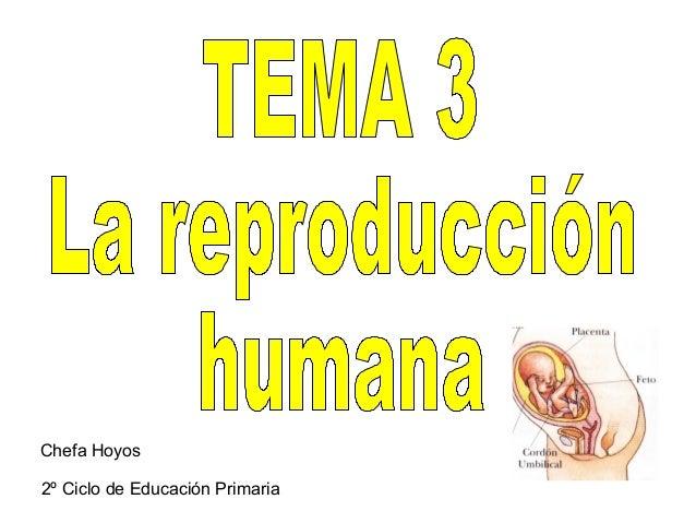 Tema3 4º la reproducción humana