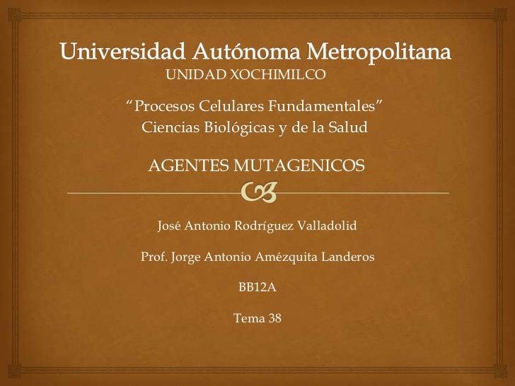 """UNIDAD XOCHIMILCO""""Procesos Celulares Fundamentales""""  Ciencias Biológicas y de la Salud  AGENTES MUTAGENICOS    José Antoni..."""