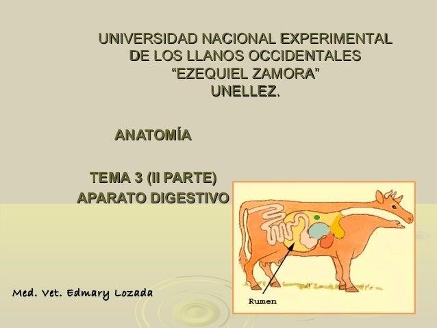ANATOMÍAANATOMÍA TEMA 3 (II PARTE)TEMA 3 (II PARTE) APARATO DIGESTIVOAPARATO DIGESTIVO UNIVERSIDAD NACIONAL EXPERIMENTALUN...