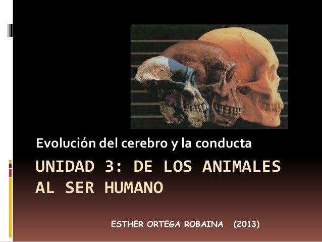 Evolución del cerebro y la conducta  UNIDAD 3: DE LOS ANIMALES AL SER HUMANO ESTHER ORTEGA ROBAINA  (2013)