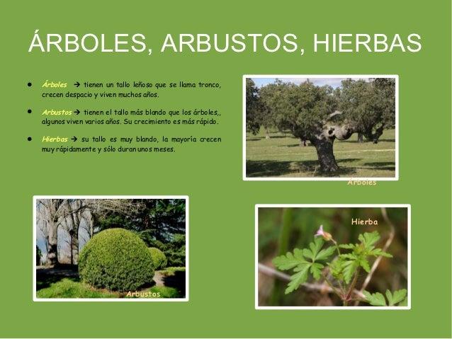 Fotos de hierba arbusto y arbol imagui - Arboles y arbustos ...