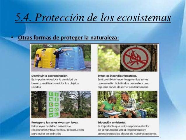 Tema 5 Los Ecosistemas 29472919 additionally Infografia likewise Desarrollo sostenible 2011 12 also Imagen likewise . on acerca de la biodiversidad