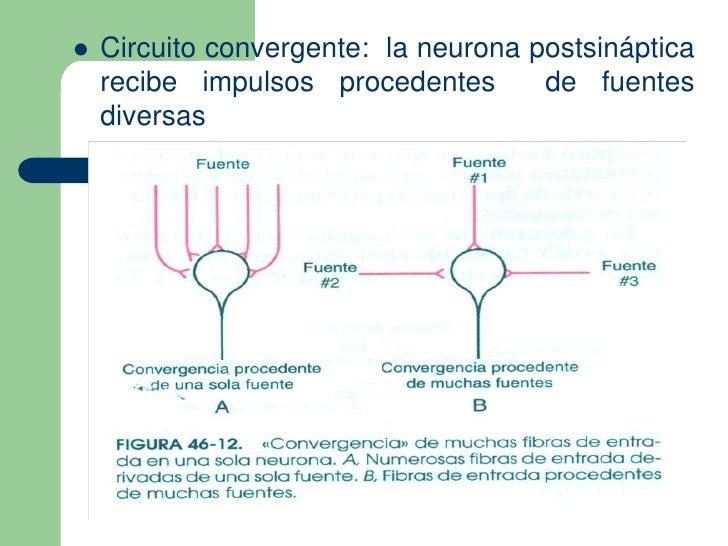 Circuito Neuronal : Tema sinapsis