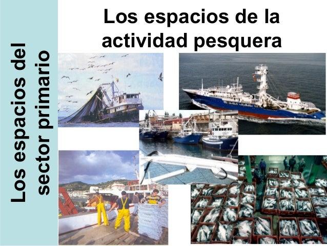 Los espacios de la                   actividad pesqueraLos espacios del sector primario