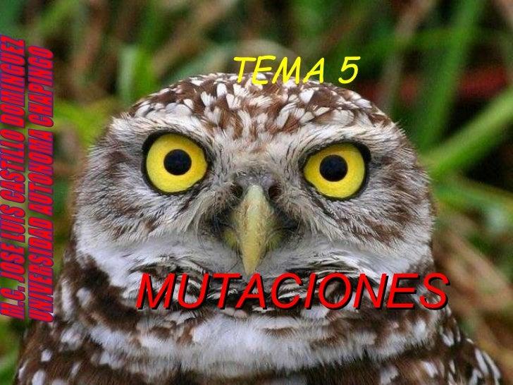 TEMA 5 MUTACIONES M.C. JOSE LUIS CASTILLO DOMINGUEZ UNIVERSIDAD AUTONOMA CHAPINGO