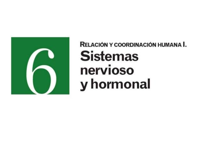 1.-EL SISTEMA DE COORDINACIÓN                         2                         2                     1
