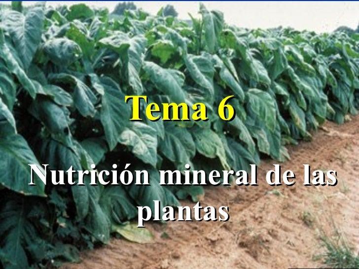 Tema 6Nutrición mineral de las        plantas                       1