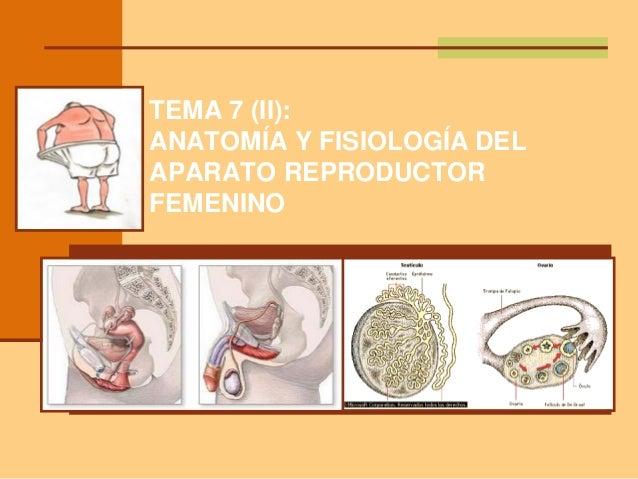 TEMA 7 (II): ANATOMÍA Y FISIOLOGÍA DEL APARATO REPRODUCTOR FEMENINO