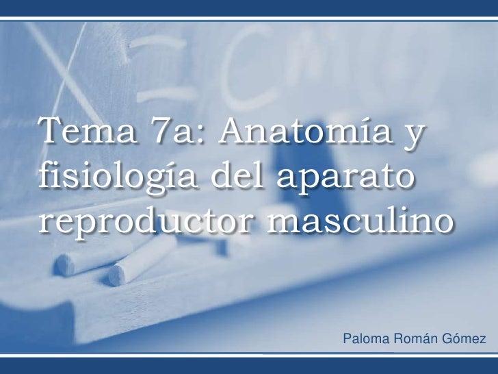 Tema 7a: Anatomía yfisiología del aparatoreproductor masculino                Paloma Román Gómez