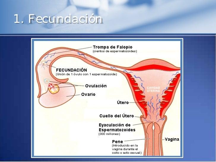 implantacion del ovulo fecundado pdf