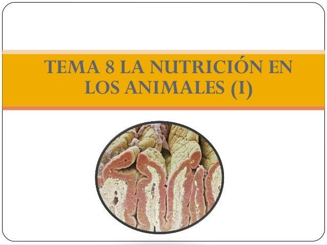 TEMA 8 LA NUTRICIÓN EN   LOS ANIMALES (I)