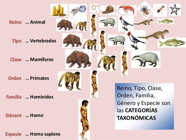 Clasificacion taxonomica de los seres vivos yahoo dating 7