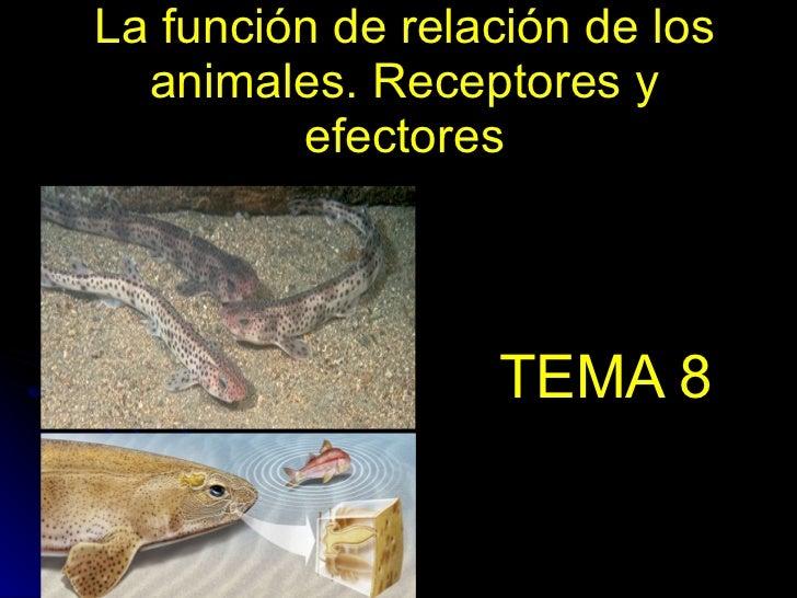 La función de relación de los animales. Receptores y efectores TEMA 8