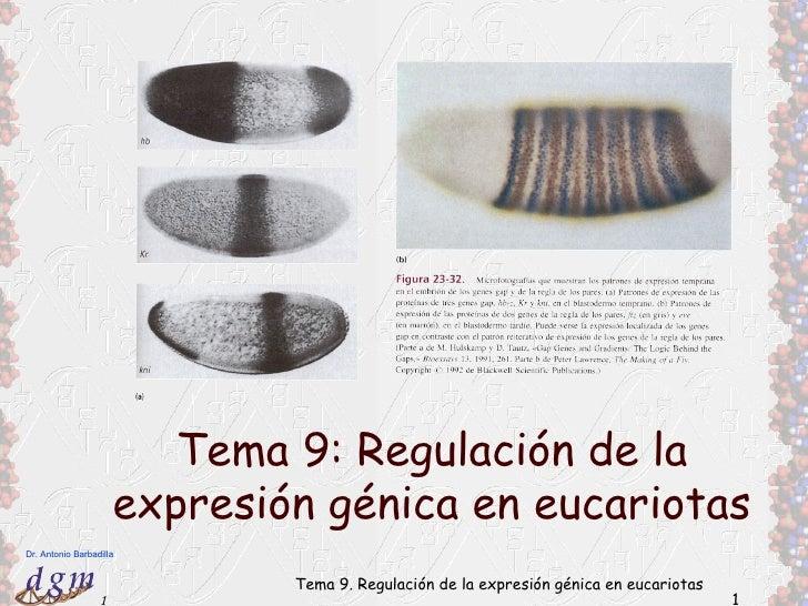 Tema 9: Regulación de la                      expresión génica en eucariotasDr. Antonio Barbadilla                        ...