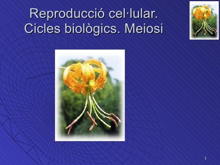 Tema 9  Bio1 2009 10(Reprod Meiosi)