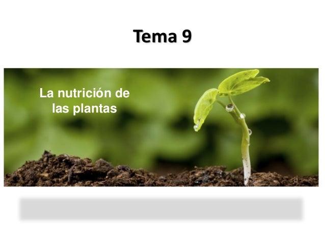 Tema 9La nutrición de  las plantas