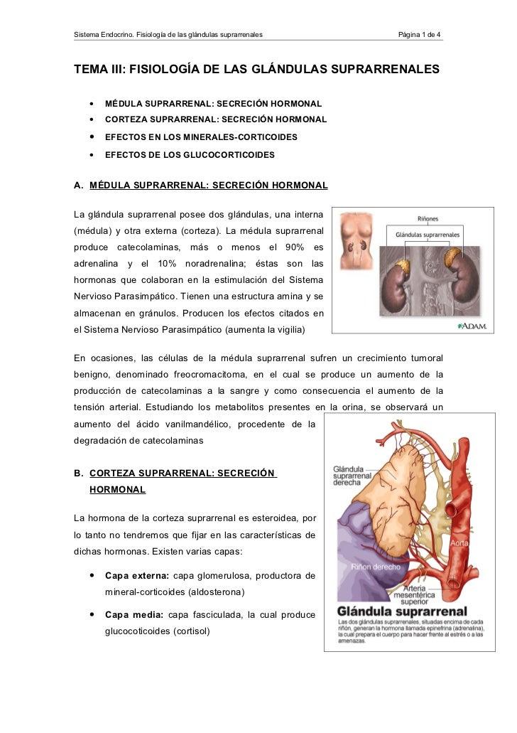 Sistema Endocrino. Fisiología de las glándulas suprarrenales            Página 1 de 4TEMA III: FISIOLOGÍA DE LAS GLÁNDULAS...