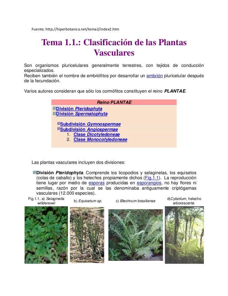 Fuente; http://hiperbotanica.net/tema2/index2.htm         Tema 1.1.: Clasificación de las Plantas                      Vas...