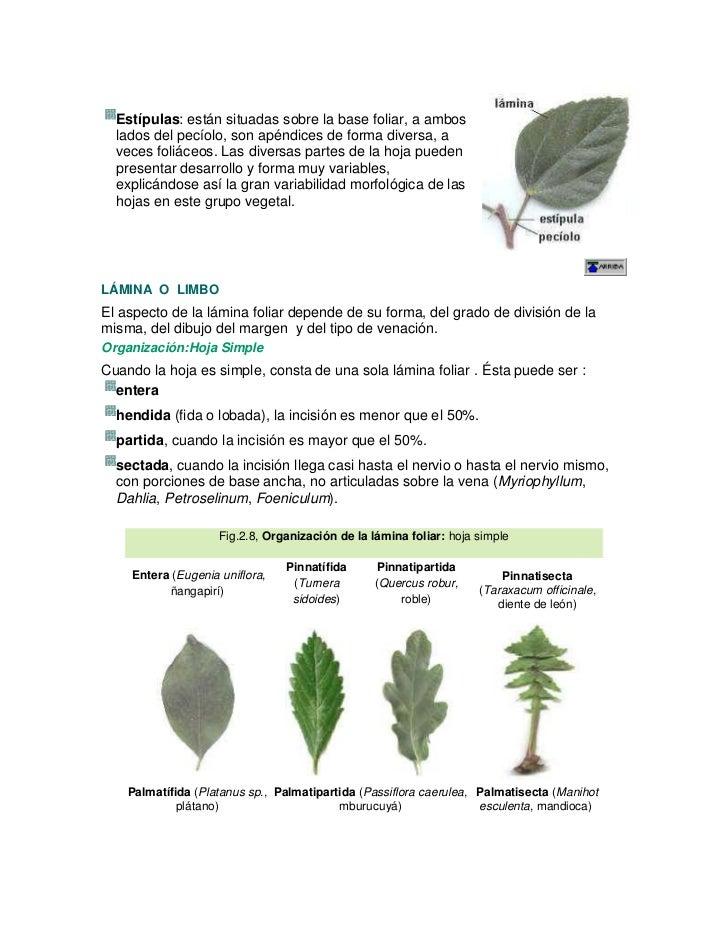 Tema plantas vasculares 2