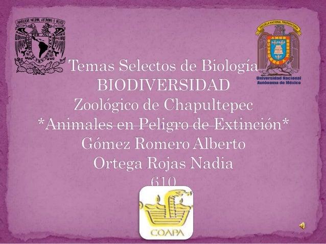 Como lo Identificamos. Especie Amenazada Especie en Peligro La extinción es la desaparición total de una especie en el pla...