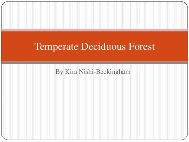 Temperate Deciduous Forest By Kira Nishi-Beckingham