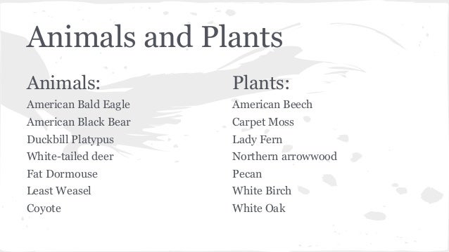 Temperate forest plants names - photo#16