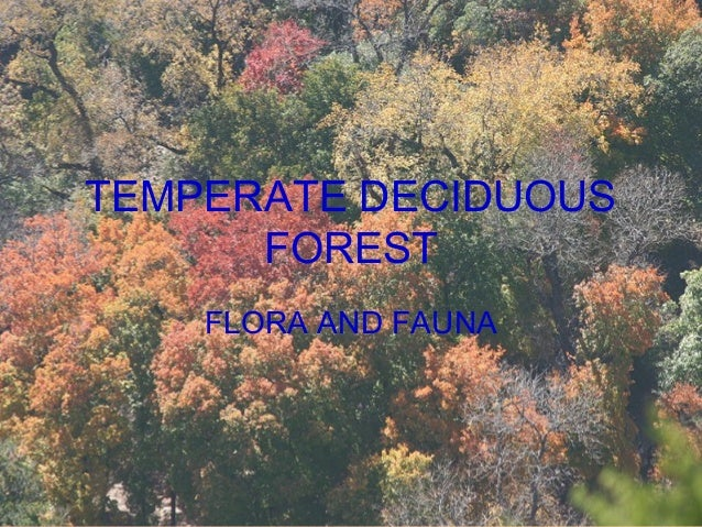 TEMPERATE DECIDUOUS FOREST FLORA AND FAUNA