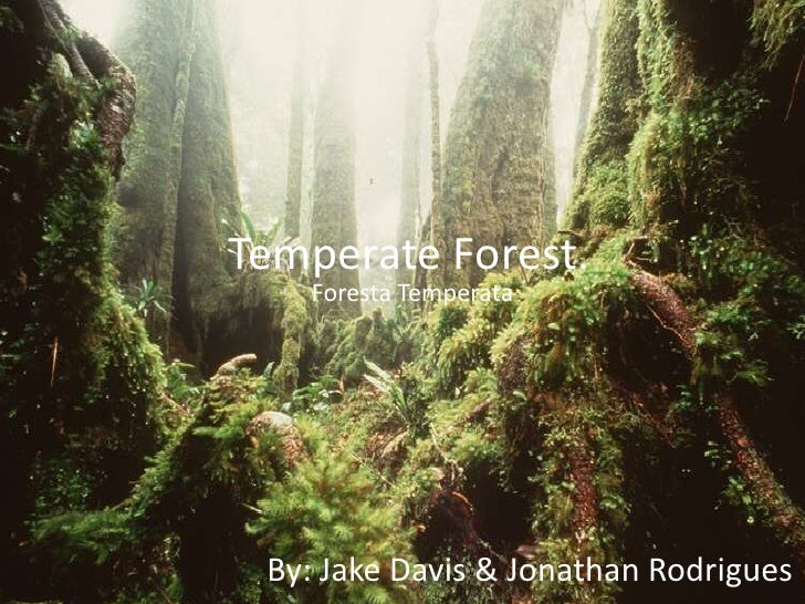 Temperate Forest. <br />ForestaTemperata<br />By: Jake Davis & Jonathan Rodrigues<br />