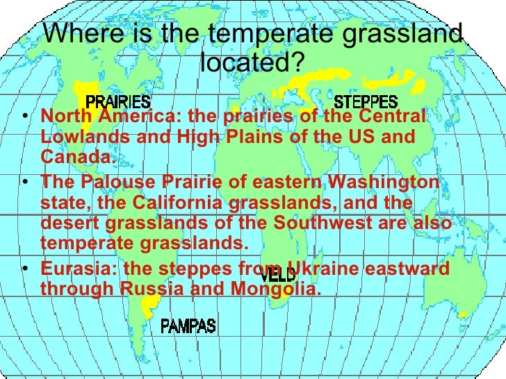 temperate grassland geographic features Grassland soil is rich, and almost anything can be grown there but poor agricultural practices can ruin soil and turn grassland into lifeless, barren spaces.
