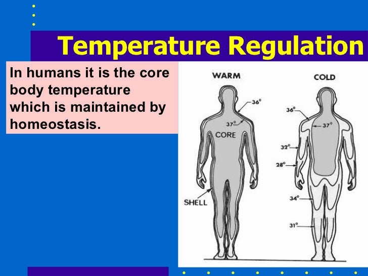 homeostasis in human Homeostasis is the activity of cells throughout the body to maintain the physiological state within a narrow range that is compatible with life homeostasis is regulated by negative feedback loops and, much less frequently, by positive feedback loops.