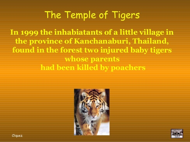 The Temple of TigersIn 1999 the inhabiatants of a little village in  the province of Kanchanaburi, Thailand, found in the ...