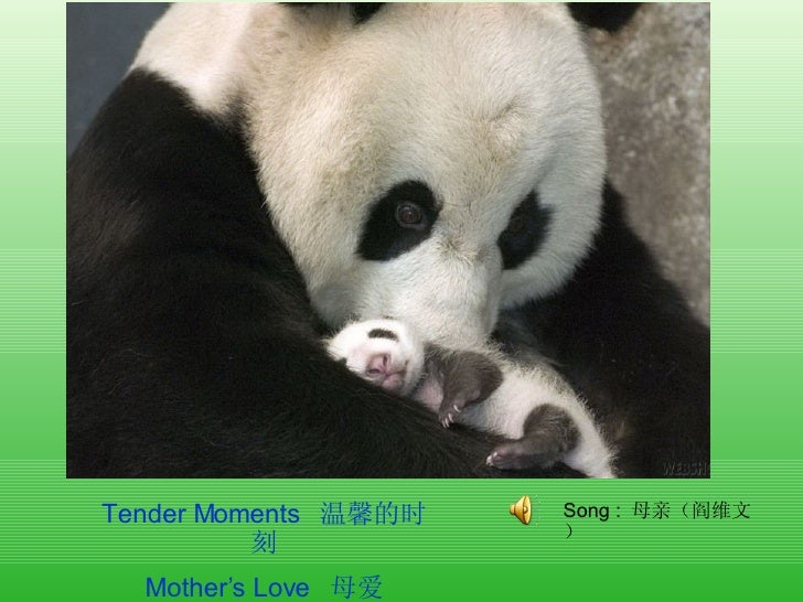 Tender Moments  温馨的时刻 Mother's Love  母爱 Song  :  母亲(阎维文)