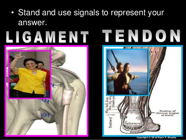 tendon or ligament quiz build a arm with popsicle sticks lesson. Black Bedroom Furniture Sets. Home Design Ideas