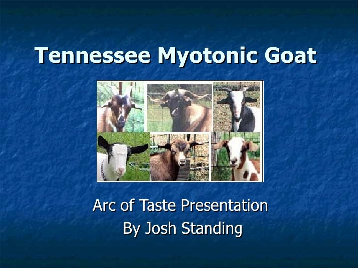 Tennessee Myotonic Goat   Arc of Taste Presentation  By Josh Standing