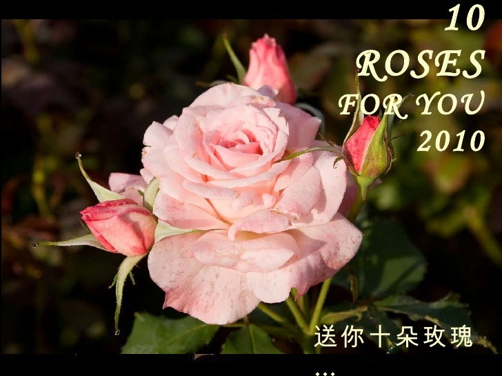 10 ROSES   FOR YOU 2010 送你十朵玫瑰 …