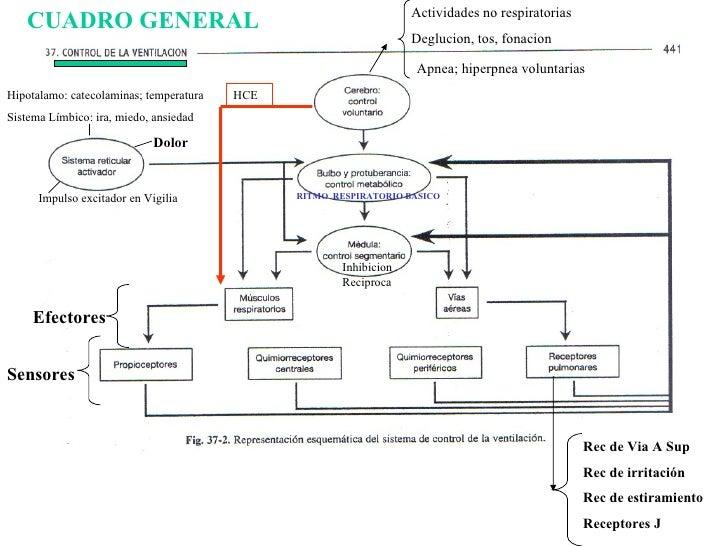 Regulacion de la ventilacion