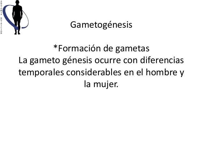 Gametogénesis       *Formación de gametasLa gameto génesis ocurre con diferenciastemporales considerables en el hombre y  ...