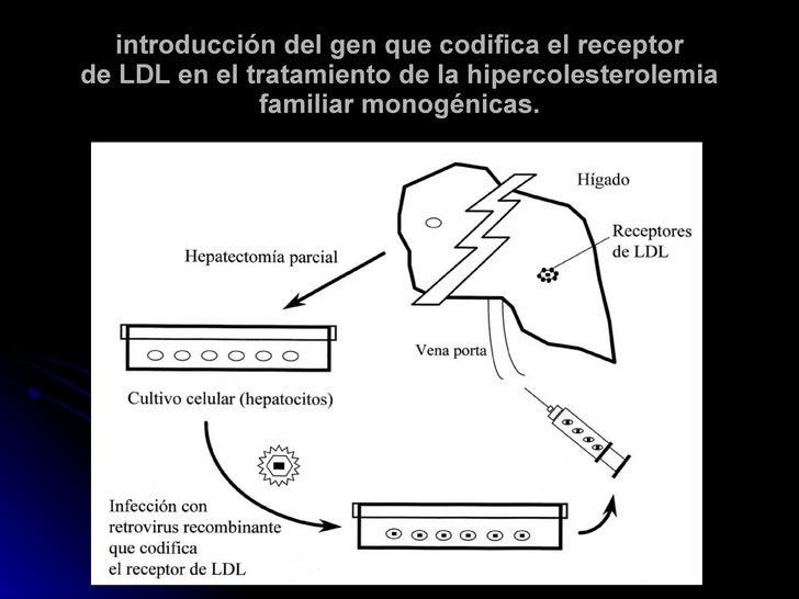 introducción del gen que codifica el receptor de LDL en el tratamiento de la hipercolesterolemia familiar monogénicas.