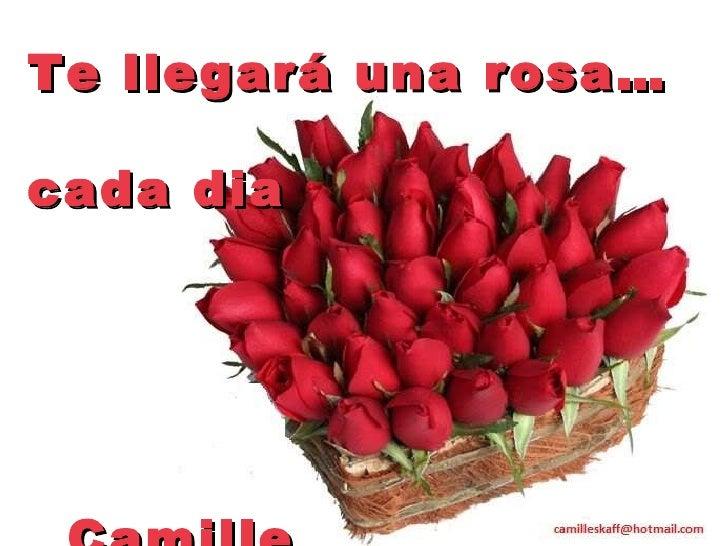 Te llegará una rosa…   cada dia   Camille
