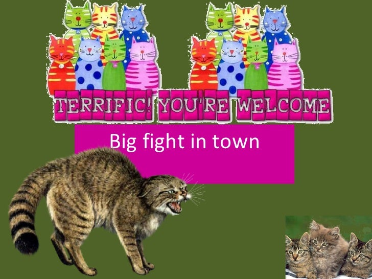 Big fight in town