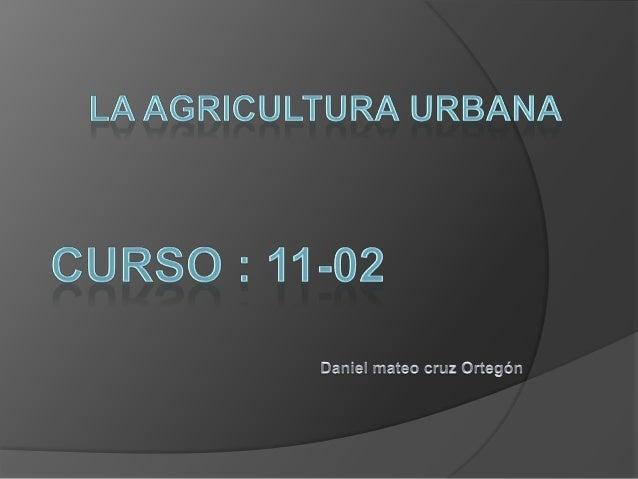 1.   QUE ES LA AGRICULTURA URBANA2.   Que plantas ornamentales y medicinales y     hortalizas se cultivan en la sabana de ...