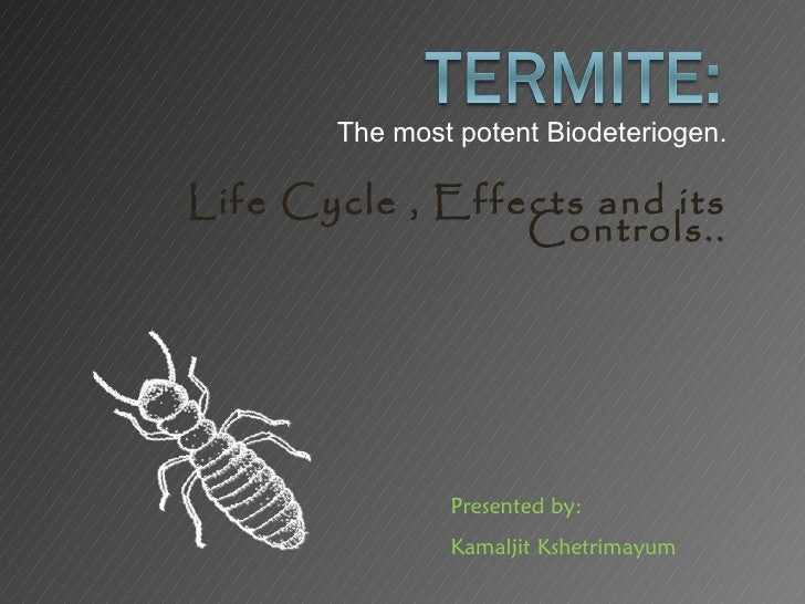 The most potent Biodeteriogen.Life Cycle , Effects and its                 Controls..               Presented by:         ...