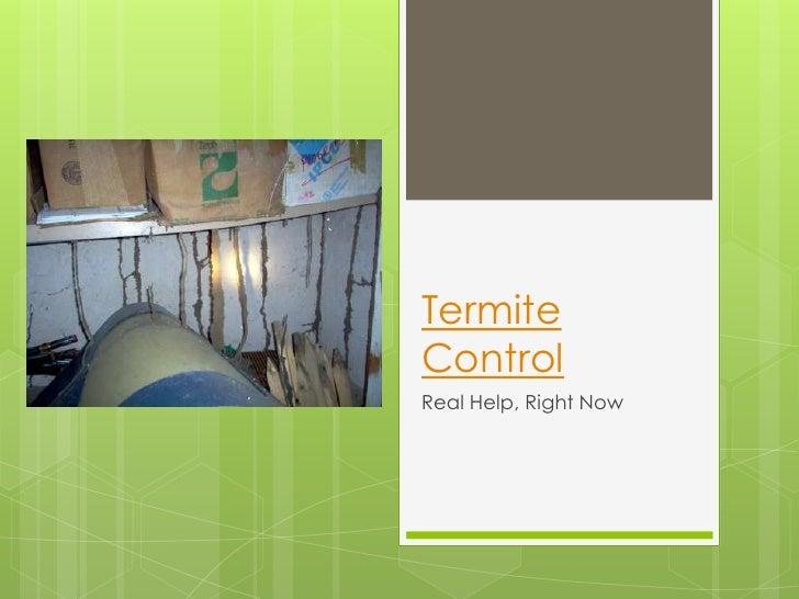 TermiteControlReal Help, Right Now