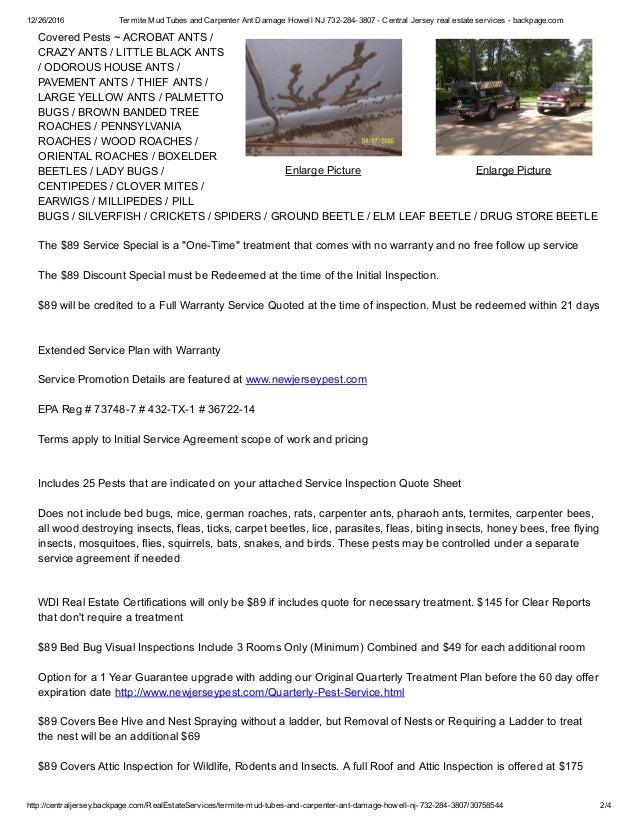 Termite Mud Tubes And Carpenter Ant Damage Hazlet Nj 732