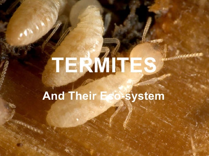 TERMITES Their Place in Eco-Systems