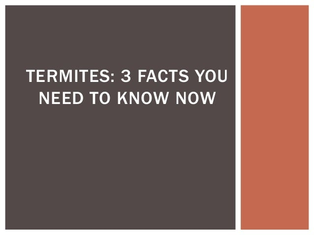 TERMITES: 3 FACTS YOUNEED TO KNOW NOW