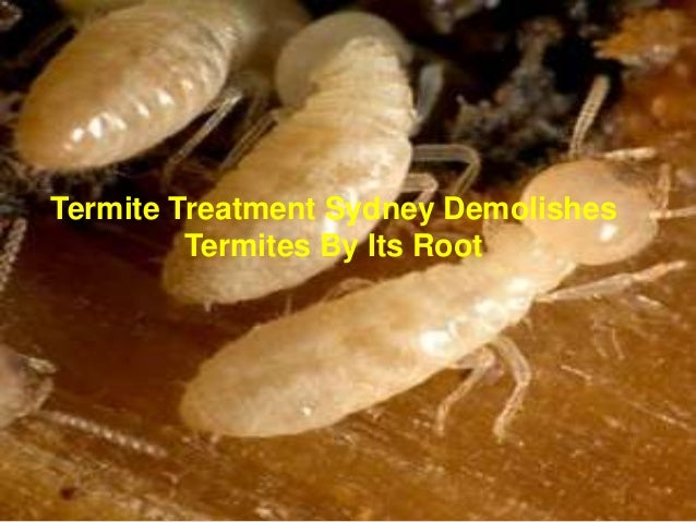 Termite treatment sydney demolishes termites by its root