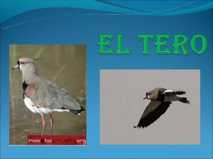 Descripción Su aspecto general es el de un ave pequeña, de colores poco llamativos pero muy  elegante y estilizada, coron...